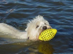 urlaub mit hund hunde ferienwohnung ferienwohnungen st. peter-ording strand